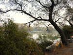 Bharatpur © K Claydon