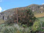 Giant Hummingbird habitat near Antisana © J Thomas