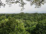 Canopy habitat, Yasuni National Park from tower © J Thomas