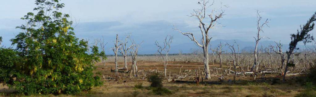 Lunugamvehera National Park © J Thomas