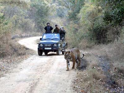 Tiger Safari at Kanha © D A Hopkins